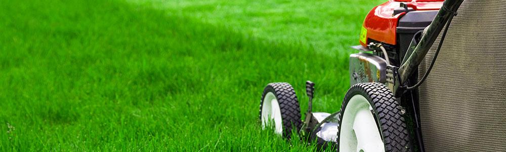 SoClean Gardening Services Grass Cutting