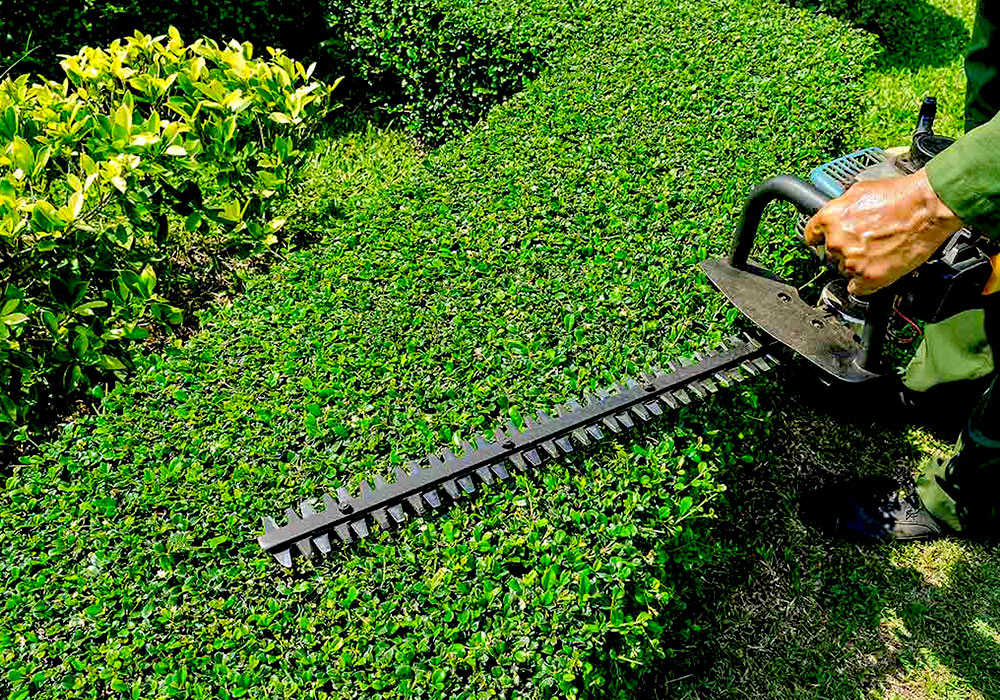 SoClean Gardening Services Hedge Trimming